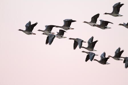 ЧЕЗ и БДЗП с общ проект за опазване на птиците