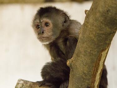 Зимно удоволствие за маймуните в зоопарк в Япония
