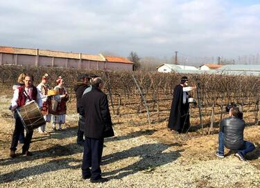 С песни и танци Uva Nestum Wine & SPA заряза лозите