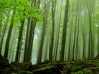 """Вековните букови гори в """"Централен Балкан"""" стават част от обект на ЮНЕСКО"""