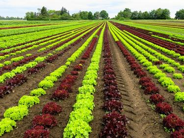 България – отличник при отчета на земеделските субсидии
