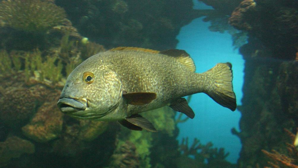 Снимка: Еколози: Климатичните промени заличават цели видове в Черно море