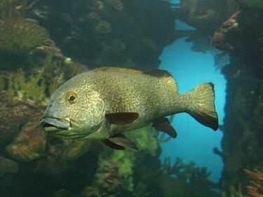 Еколози: Климатичните промени заличават цели видове в Черно море