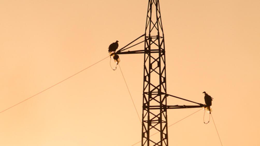 Снимка: Обезопасиха опасни за птиците кабели в Кресненското дефиле