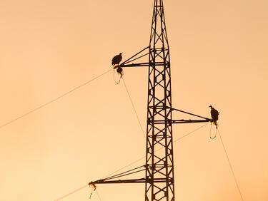 Обезопасиха опасни за птиците кабели в Кресненското дефиле