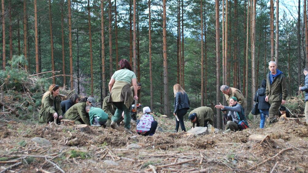 Снимка: Служители на Агенцията по горите и доброволци залесяваха на Витоша