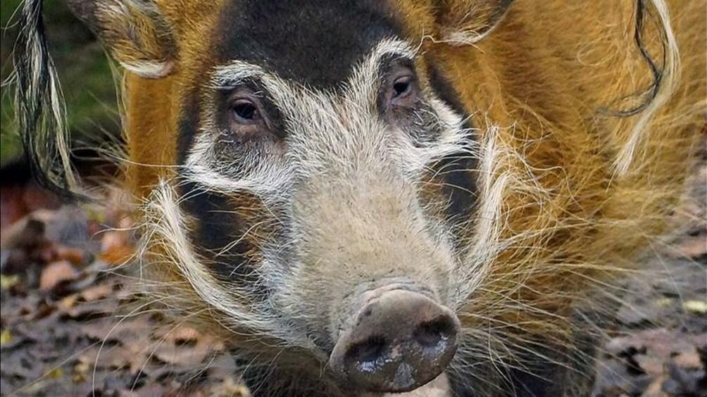 Снимка: Столичният зоопарк събира дарения за ново животно