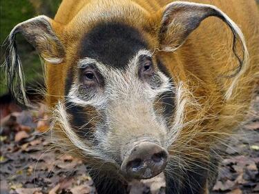 Столичният зоопарк събира дарения за ново животно