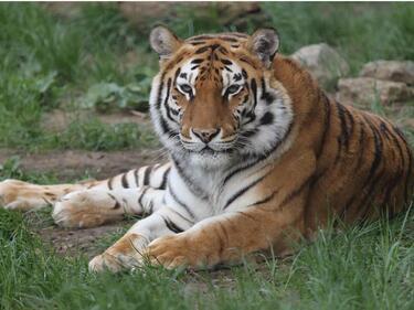 Близки срещи в Софийския зоопарк