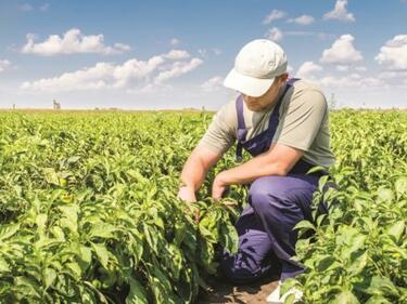 Фермерите могат да наемат работници на 4 часа с трудов договор