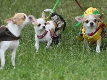 Кучешки парад в столичния Южен парк тази неделя