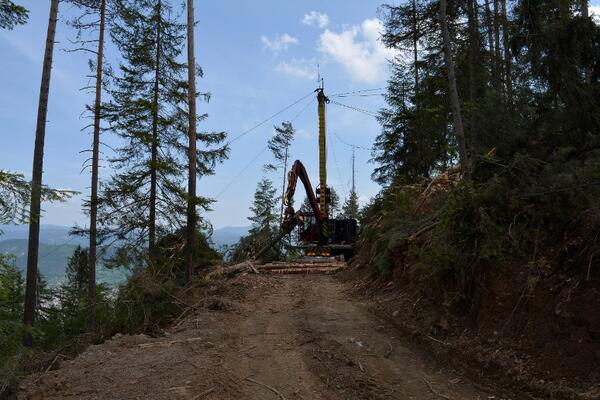 Продължава приемът на проекти за справяне с щети по горите от природни бедствия