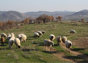Фермери защитават живота на добитъка си с блокада