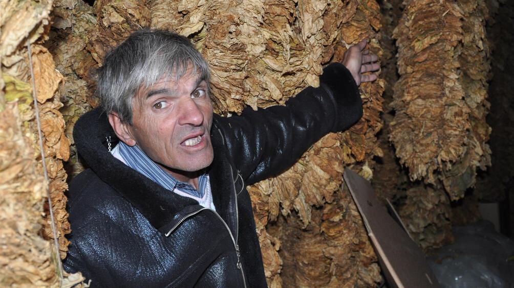 Производители на тютюн от Долно Осеново се надяват, че след