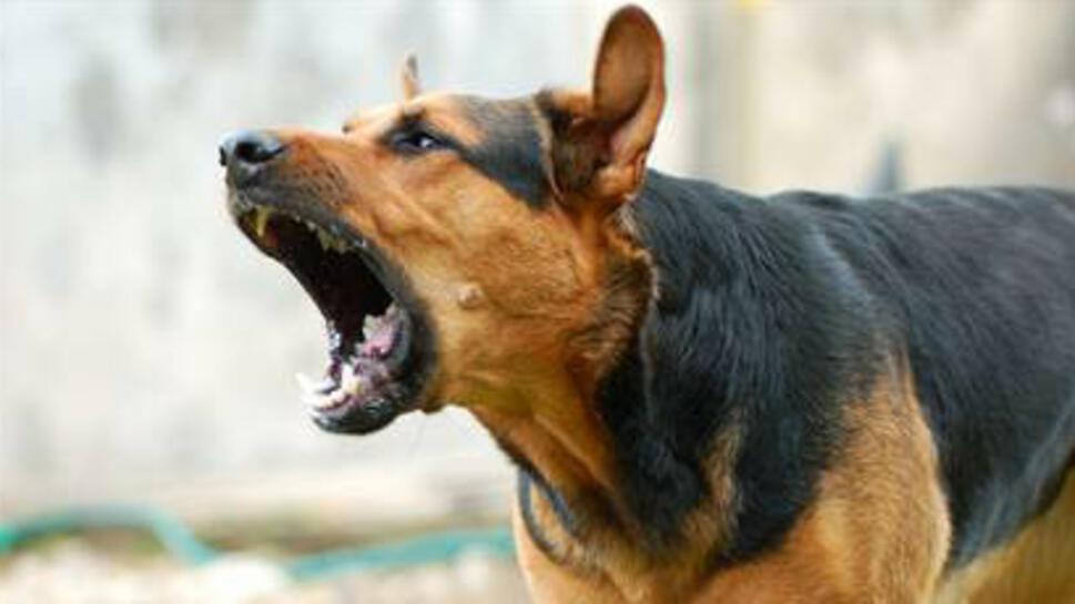 Снимка: Кучета убиха собственика си в сливенско село