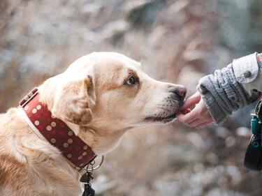 Три пъти по-малко улични кучета в София за последните 11 години
