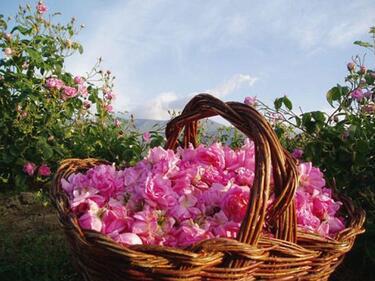 Продукти от цвят на маслодайна роза ще се произвеждат по национални стандарти
