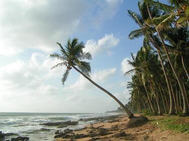 Шри Ланка - №1 туристическа дестинация за 2019-а