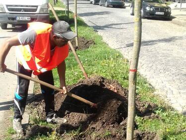 """Засаждат още дръвчета в новия парк """"Възраждане"""""""