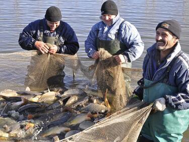 Свръхпотреблението може да унищожи рибните запаси на планетата