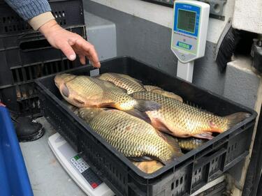 Над половин тон риба иззета от магазините за днешния празник