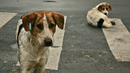 Правителството с програма за овладяване популацията на бездомните кучета