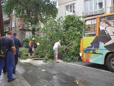 Отново паднало дърво, този път върху кола