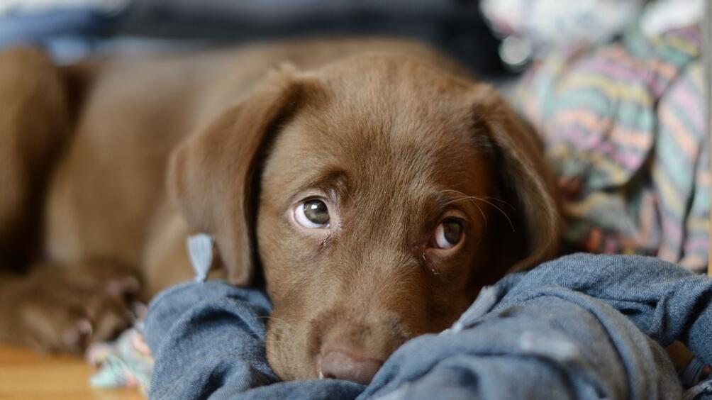 50 кучета от приютите на Екоравновесие са били осиновени през