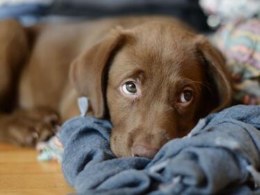 50 кучета от приюти са намерили своя нов дом през януари