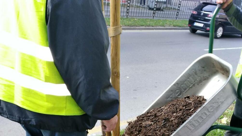 От софийското озеленяване са погрижиха за над 1000 дървета в