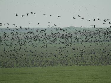 Броят колко водолюбиви птици зимуват у нас