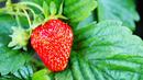 5 суперхрани срещу косопад